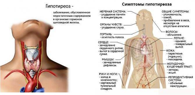 Лечение бадами щитовидную железу