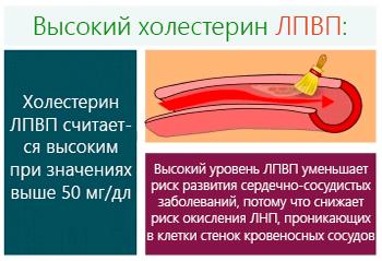 Липопротеиды высокой плотности в анализе крови повышены: что это значит?