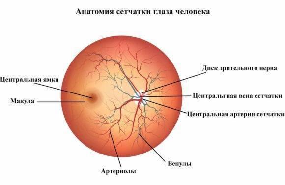 Тромбоз центральной вены сетчатки глаза — как проводится лечение
