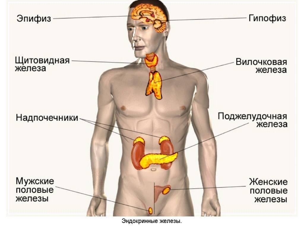эндокринная система симптомы
