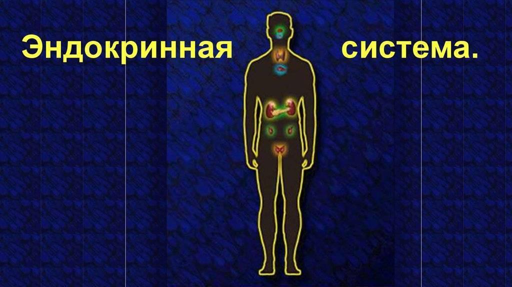 эндокринные железы таблица