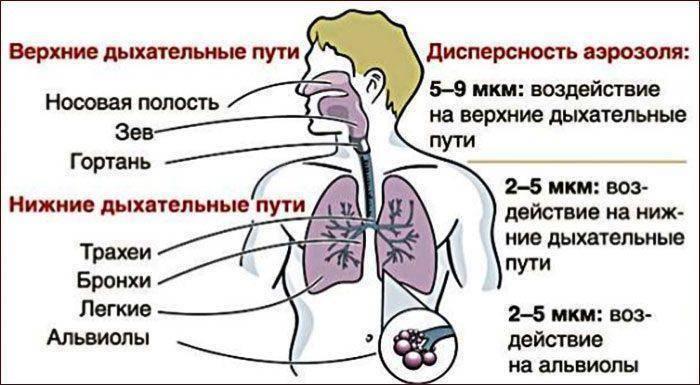 Острое воспаление трахеи — проявления у взрослых и детей, лечение, последствия болезни