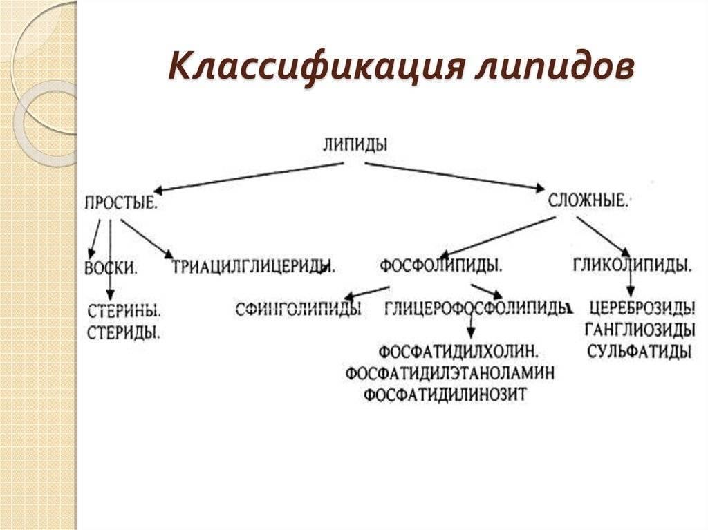 Липиды — википедия. что такое липиды