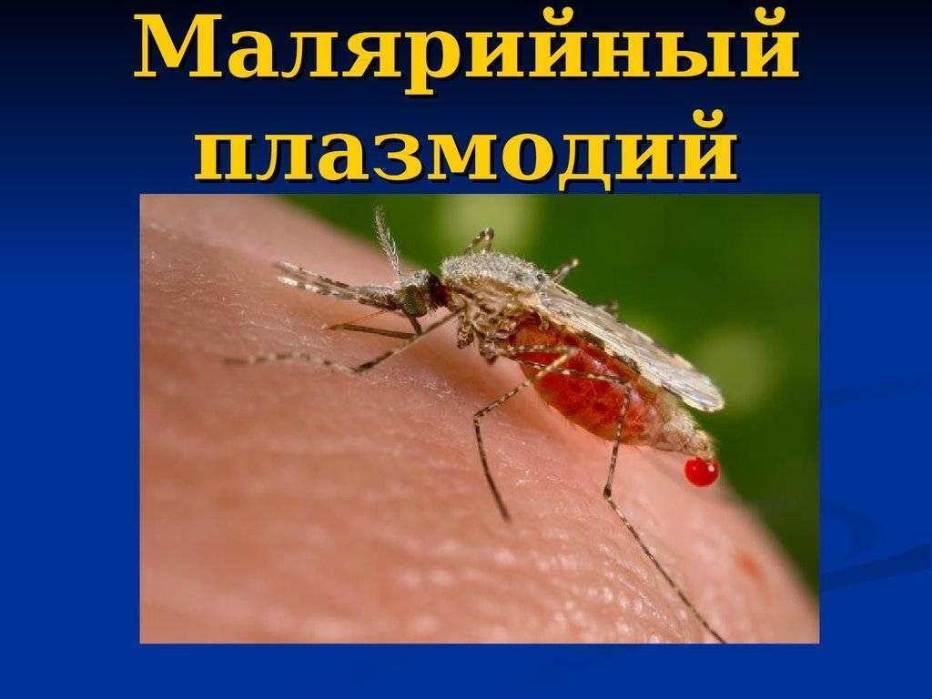 Малярийный плазмодий — возбудитель малярии