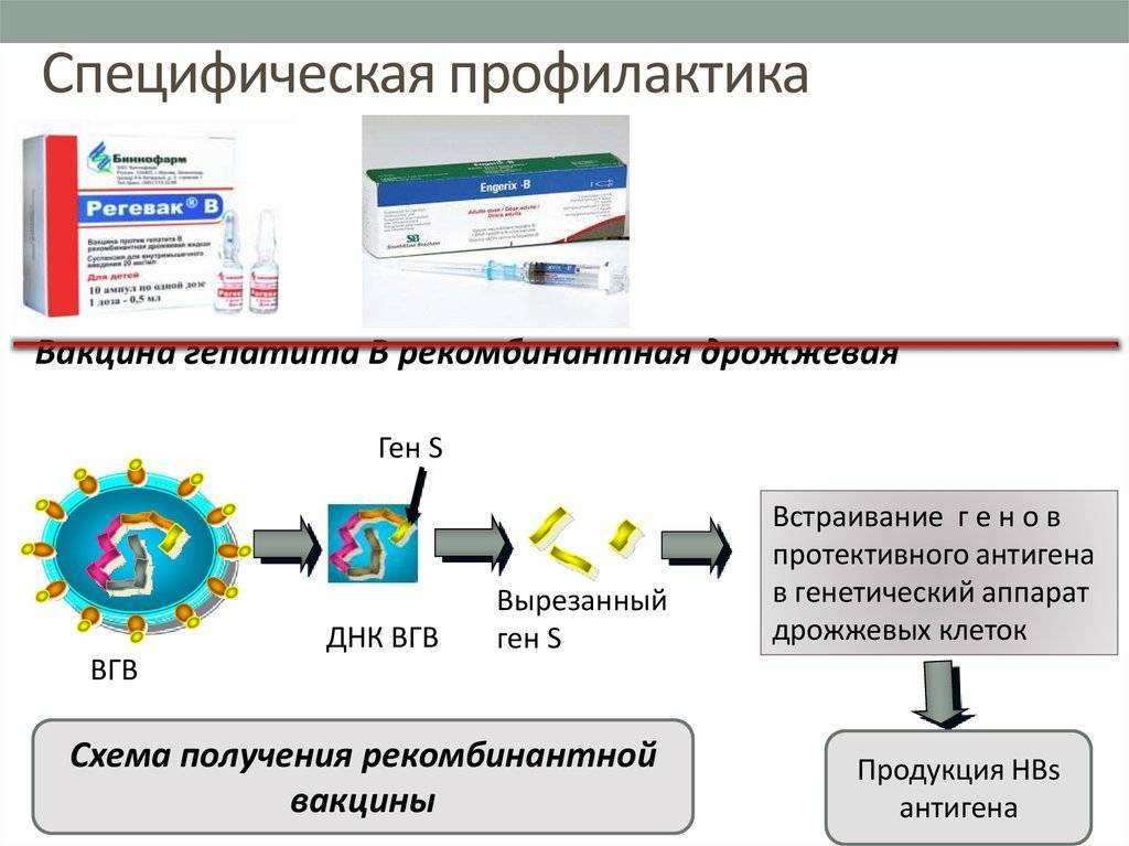 Как можно профилактировать заражение вирусным гепатитом в (б)