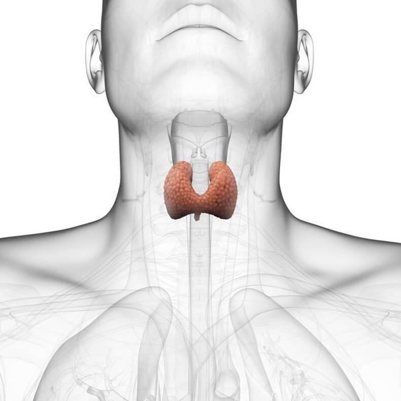 щитовидка железа