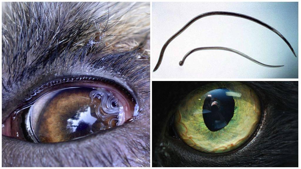 паразиты в глазах человека лечение