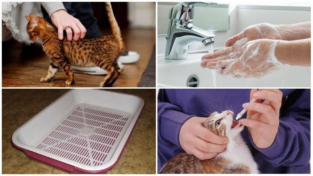 как передаются глисты от кошки к человеку