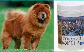 Собачий жир: лечебные свойства, применение и противопоказания