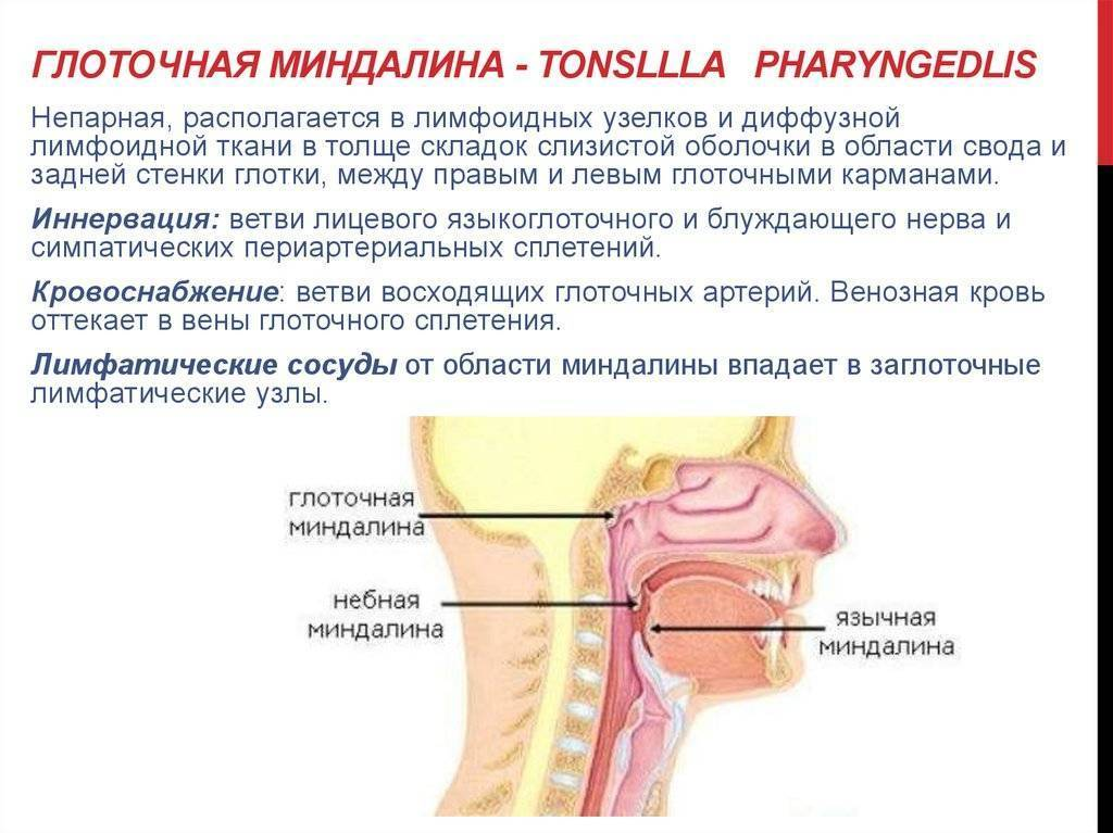Тонзиллит. причины, симптомы, признаки, диагностика и лечение патологии :: polismed.com