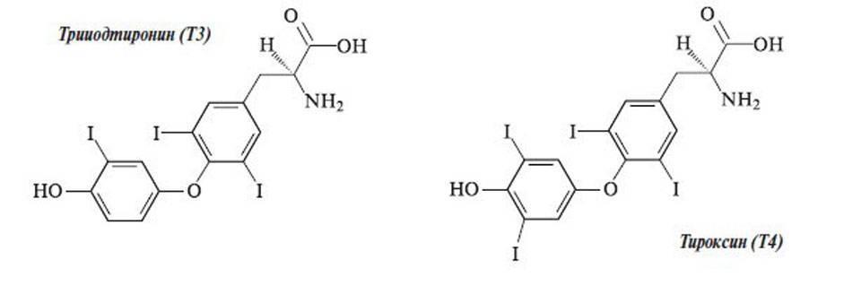 гормоны щитовидной железы т4