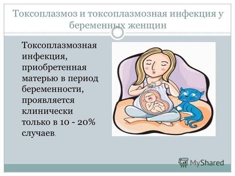 Токсоплазмоз у беременных – симптомы, анализ, лечение