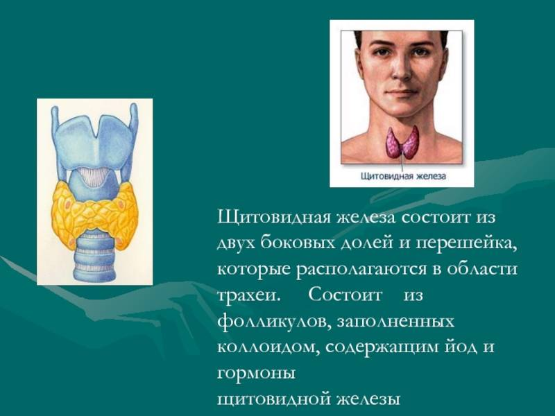 Что такое аденома щитовидной железы, как ее распознать и вылечить?