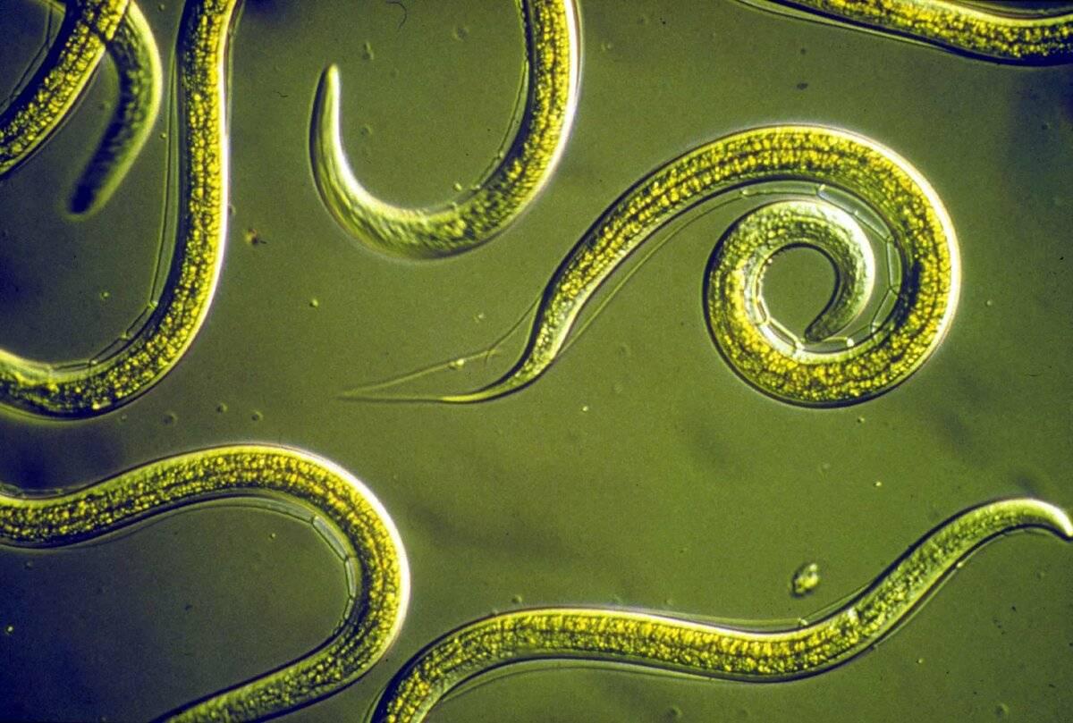 Паразиты и опасные болезни, которые они могут вызывать