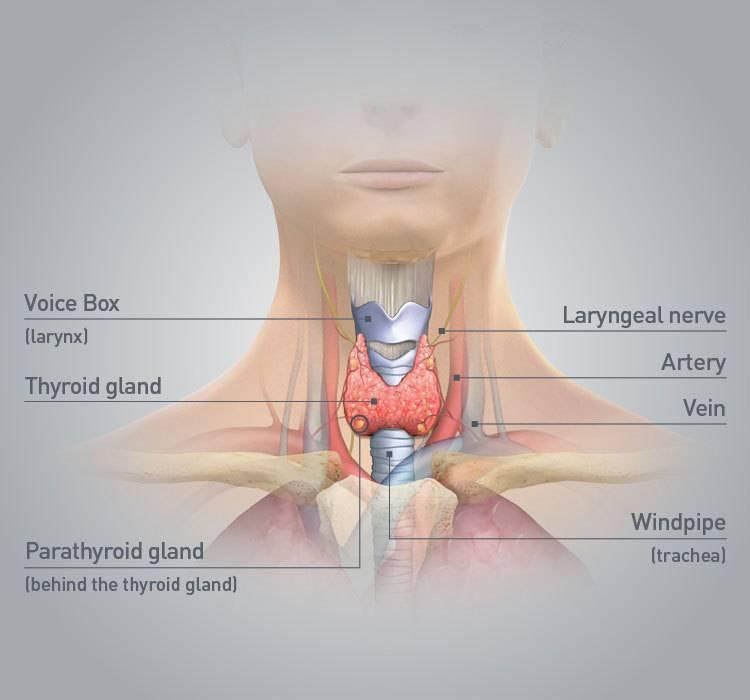 Дефицит железа и гипофункция щитовидной железы. часть 4
