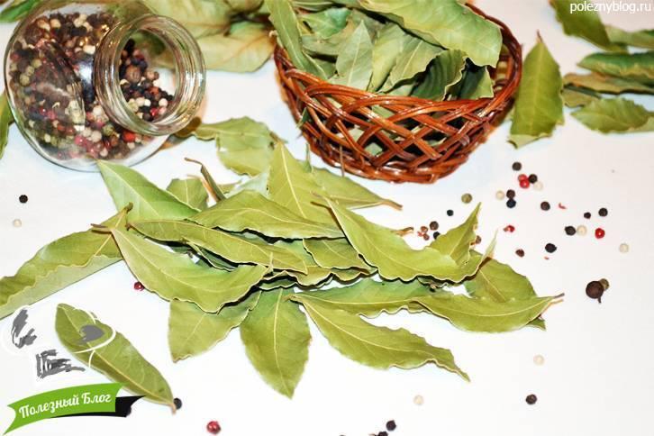 лавровый лист от цистита рецепт