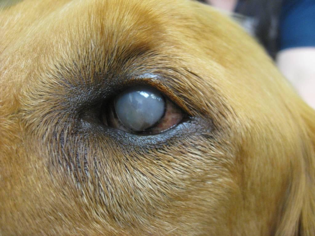 как лечить бельмо на глазу