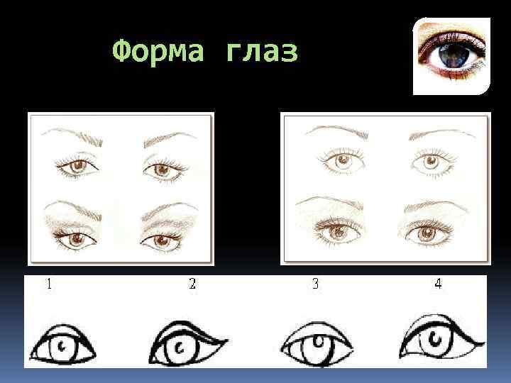 Макияж и форма глаз. полезные советы от визажистов