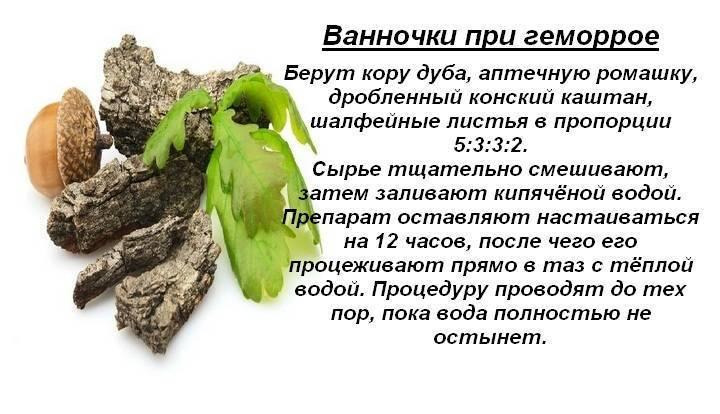 кора дуба при геморрое