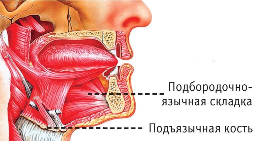 Язычная миндалина латынь