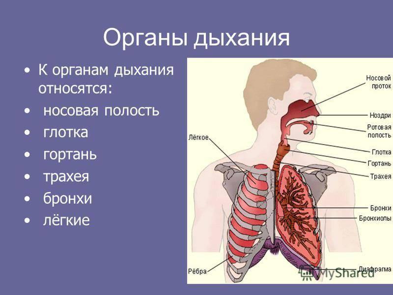 болезни трахеи