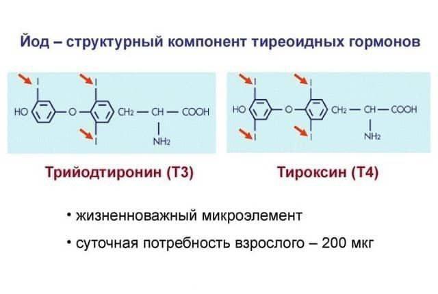 Гормон т3 свободный (трийодтиронин): за что отвечает, норма, причины отклонений