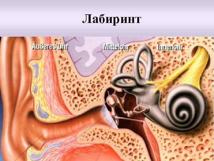 Воспаление внутреннего уха