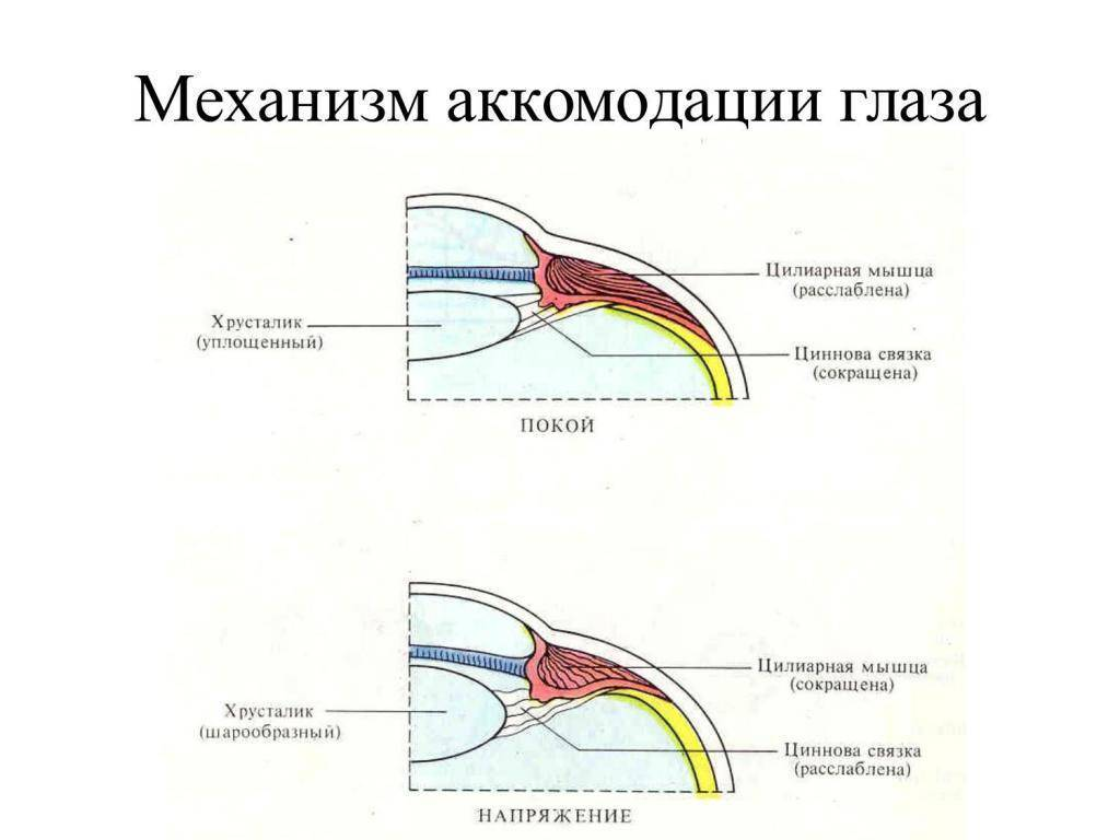 Аккомодация глаза – диагностика и лечение