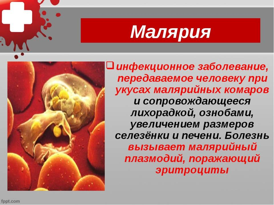 Российский биолог рассказал, так ли опасен коронавирус и почему им переболеет вся планета