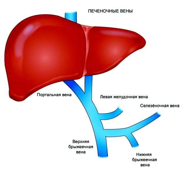 Регионарная лимфаденопатия: что это такое, причины развития, симптомы и лечение