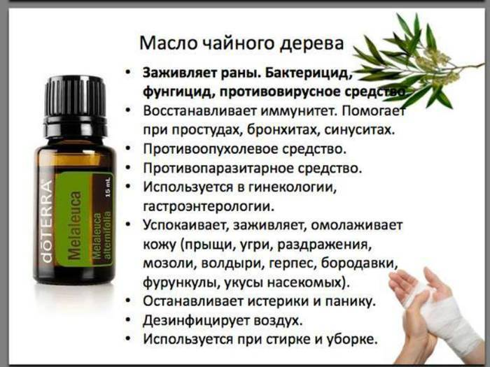 Способы применения масла чайного дерева. лечение маслом чайного дерева - запись пользователя жанна (ganna2511) в дневнике - babyblog.ru