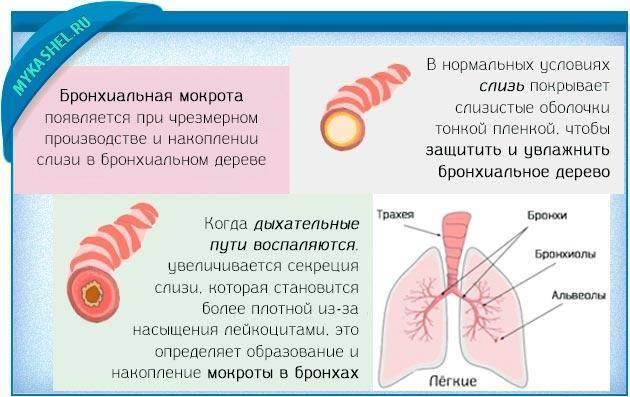 кашель с мокротой без температуры