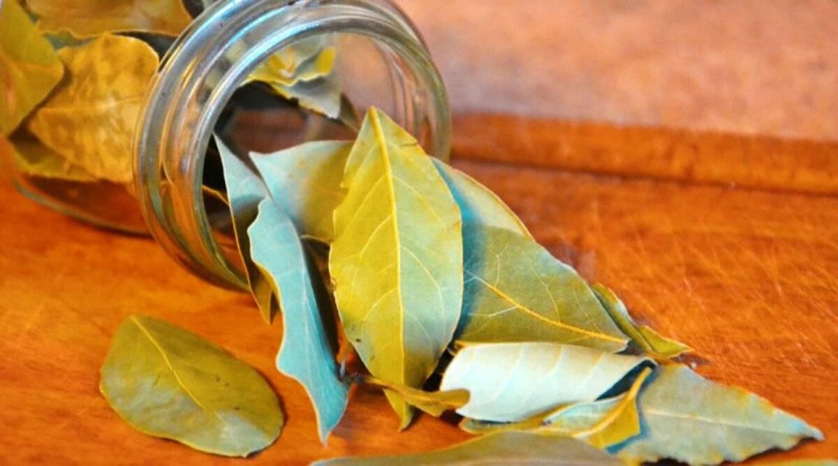 Лечение геморроя лавровым листом — самые эффективные рецепты