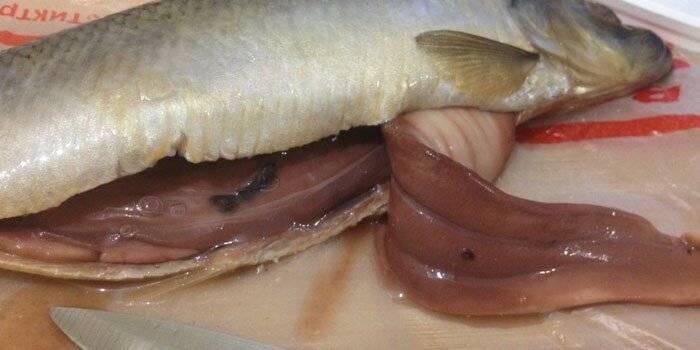 Что такое селитерный червь и каковы причины его появления?