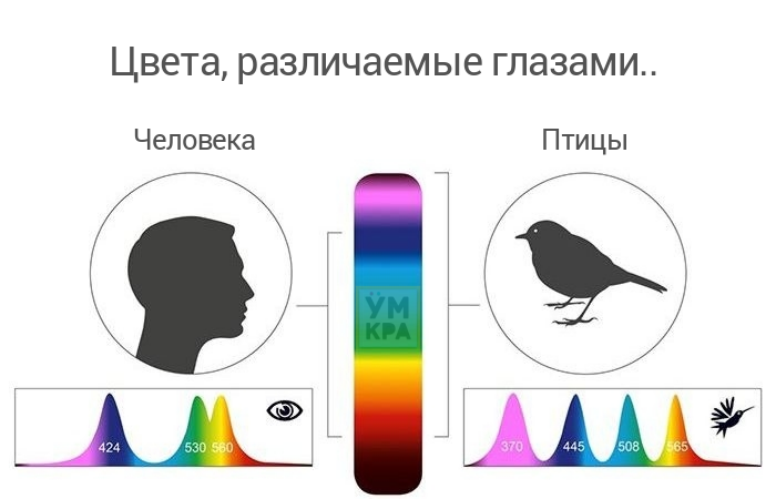 Интересные факты о глазах и зрении человека, их строение и функционирование