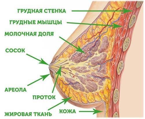 Во время менопаузы болит грудь