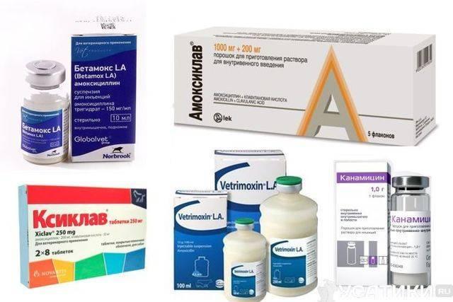 Какие антибиотики лучше принимать при отите у взрослых и детей