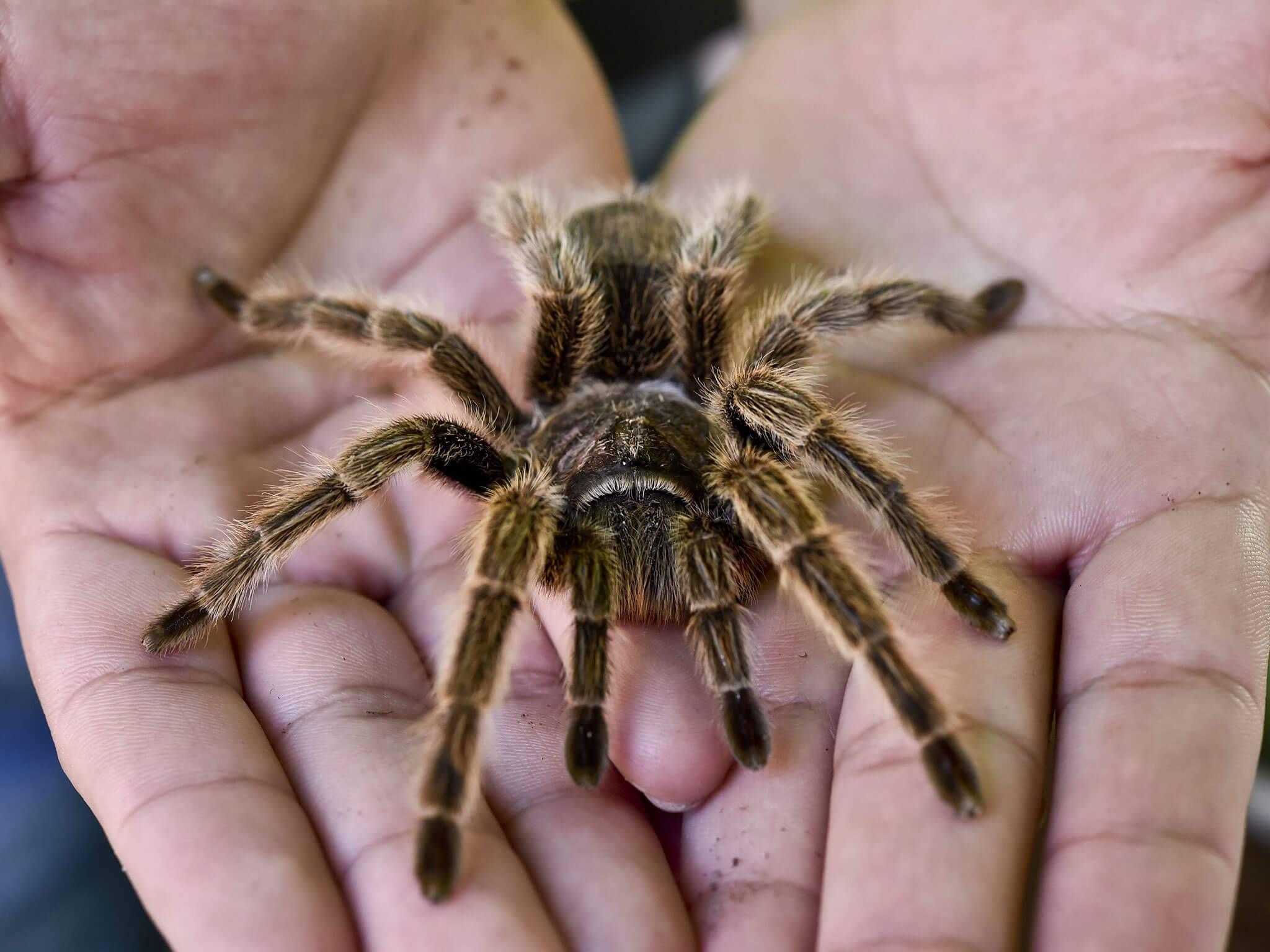 Боязнь пауков (арахнофобия): понятие и как избавиться