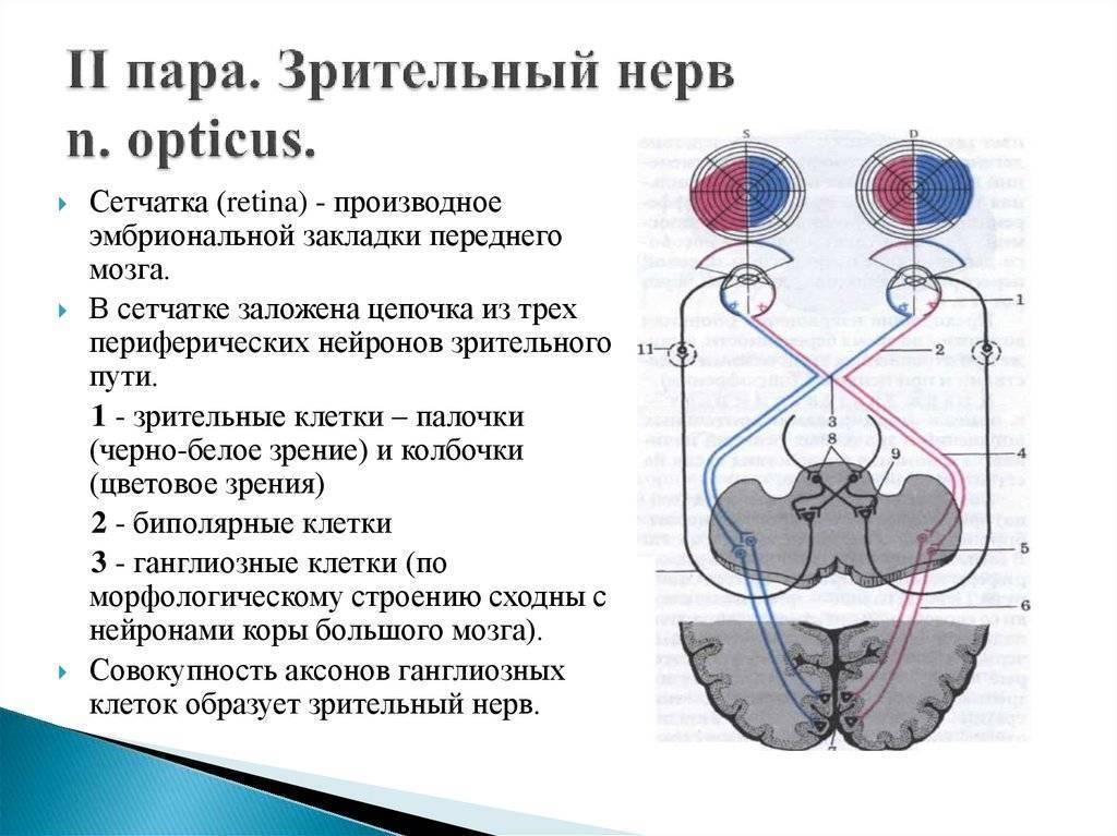 зрительный нерв лечение