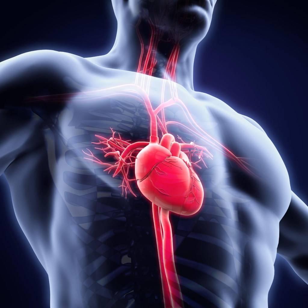 Атеросклеротический кардиосклероз: почему возникает эта форма ибс и как ее лечить?