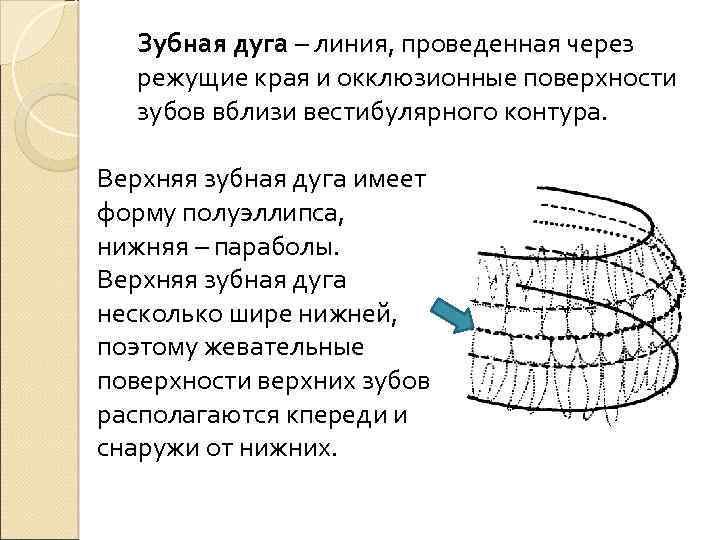 лицевая дуга ортодонтия