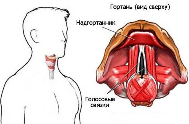 Болезни голосовых связок: симптомы и лечение