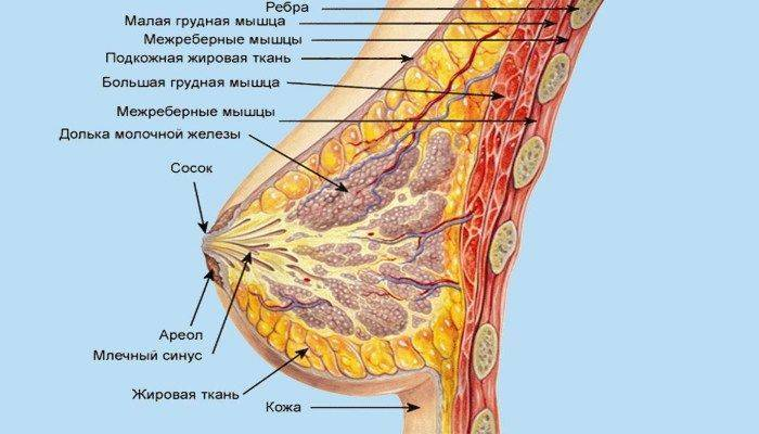 почему болит грудь у мужчин