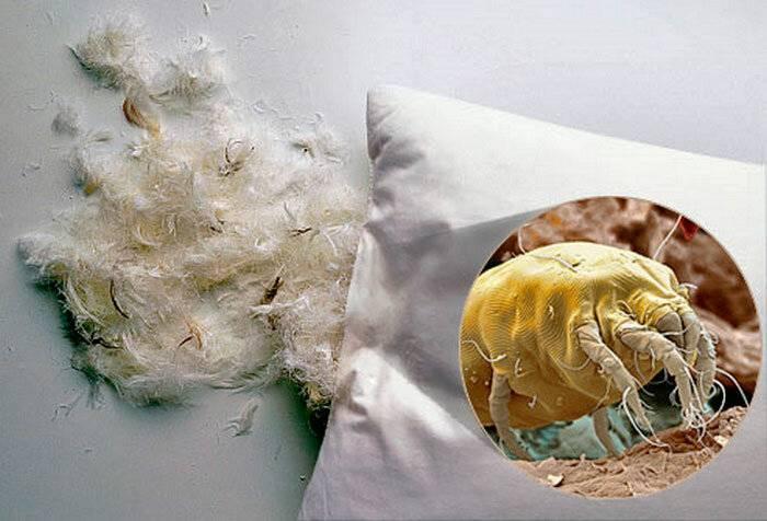 Аллергия и глисты: инфекционные и паразитарные болезни
