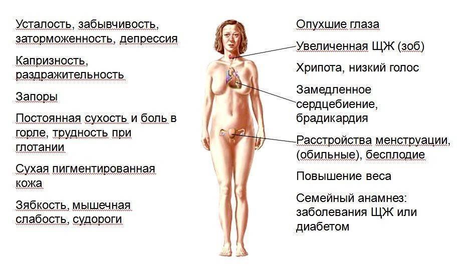 народные средства для щитовидной железы у женщин