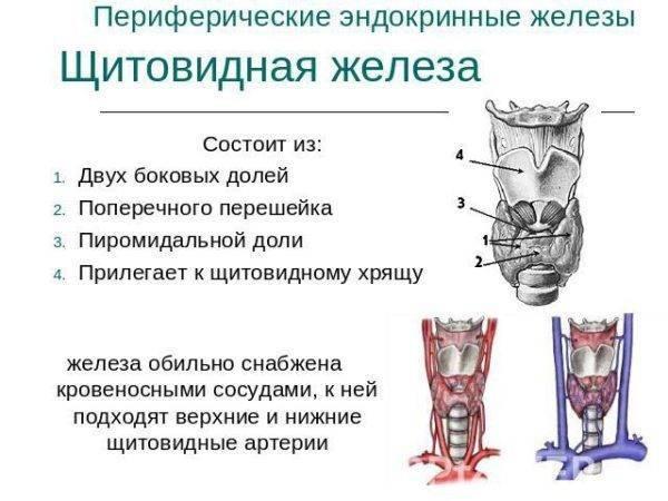 лечение аденомы щитовидной железы без операции