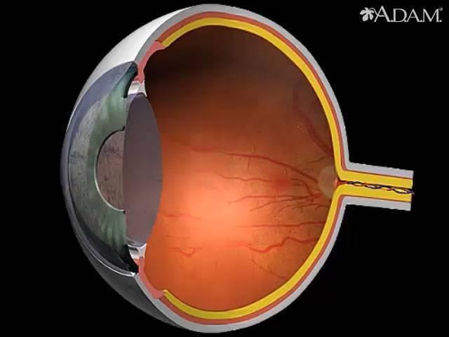Глаукома и голодание: ощущения во время процесса оздоровления