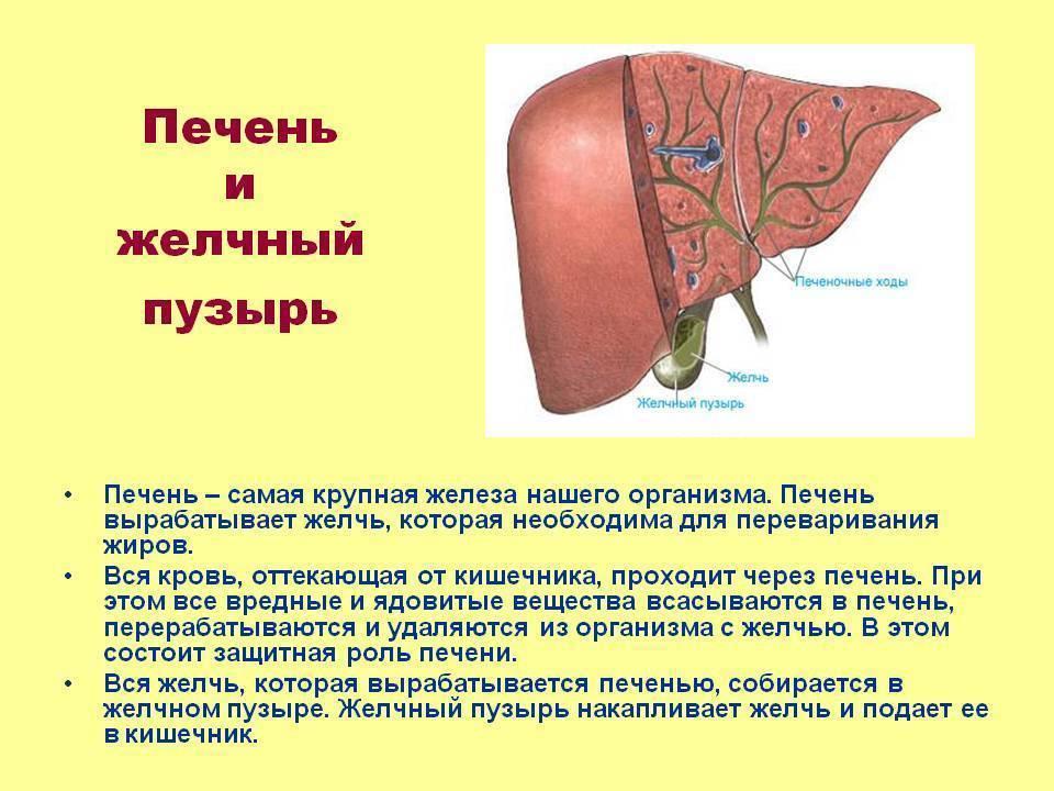 желчный пузырь симптомы и лечение