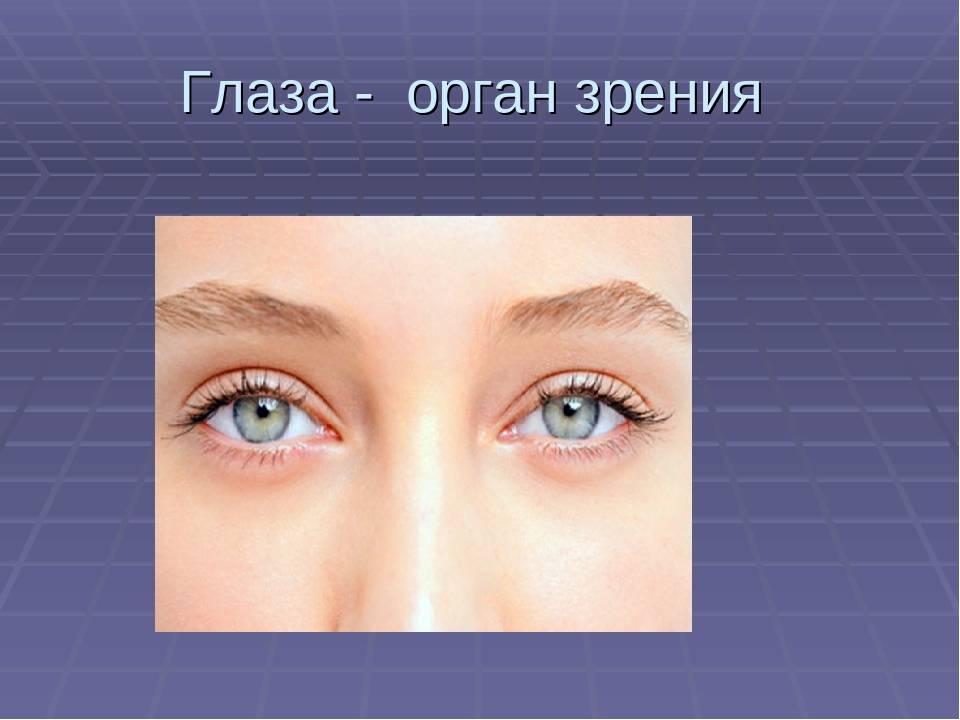 Функции и строение органа зрения человека