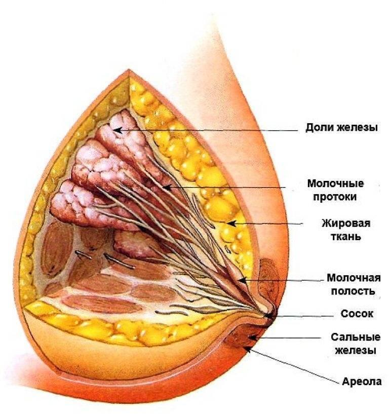 Боль в молочной железе слева у женщин лечение